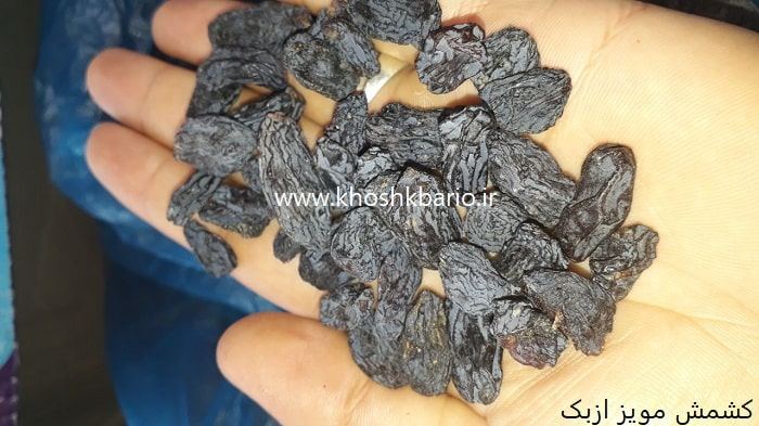 خرید کشمش مویز