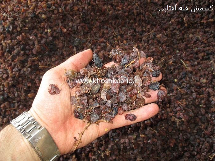 خرید مستقیم کشمش ارزان