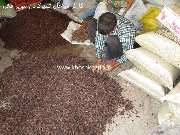 خرید کشمش در یزد