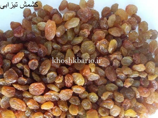 فروش مویز فخری